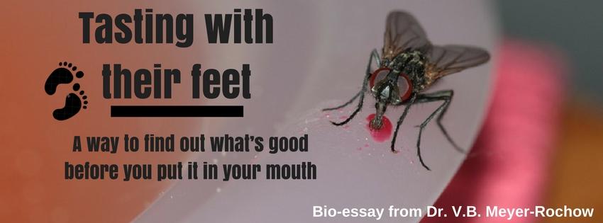 taste sense insects flies