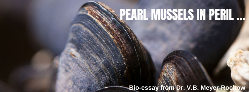 biology zoology insects pearl mussels